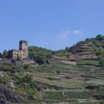 Rhine wine country